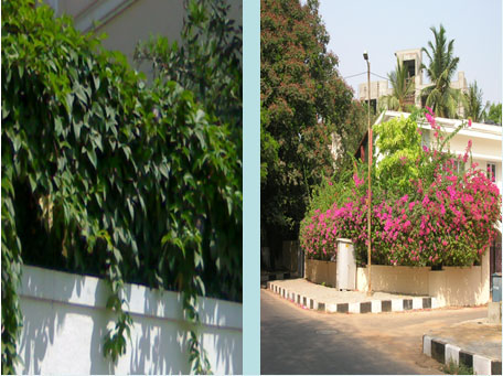 home compound wall garden